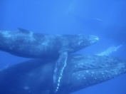 baby & moma whale